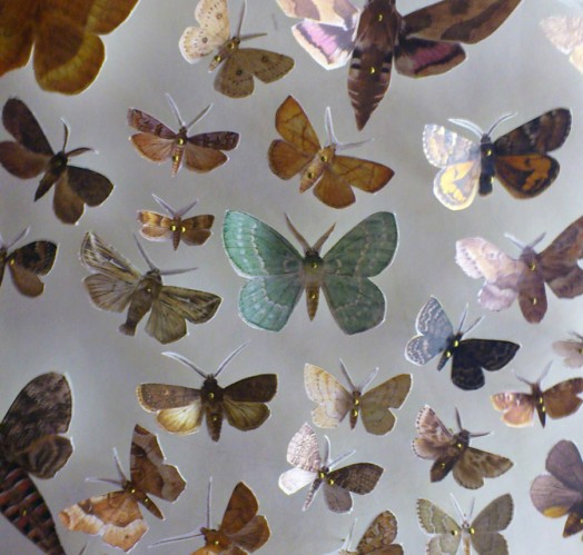 moths - the collections