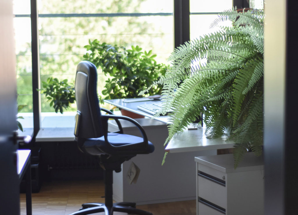 Large green fern and desk accessories on desk next to desk chair